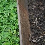 Steel Garden Edging_Victoria (10)