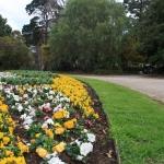 Steel Garden Edging_Victoria (4)