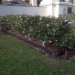 garden-steel-edging-epping